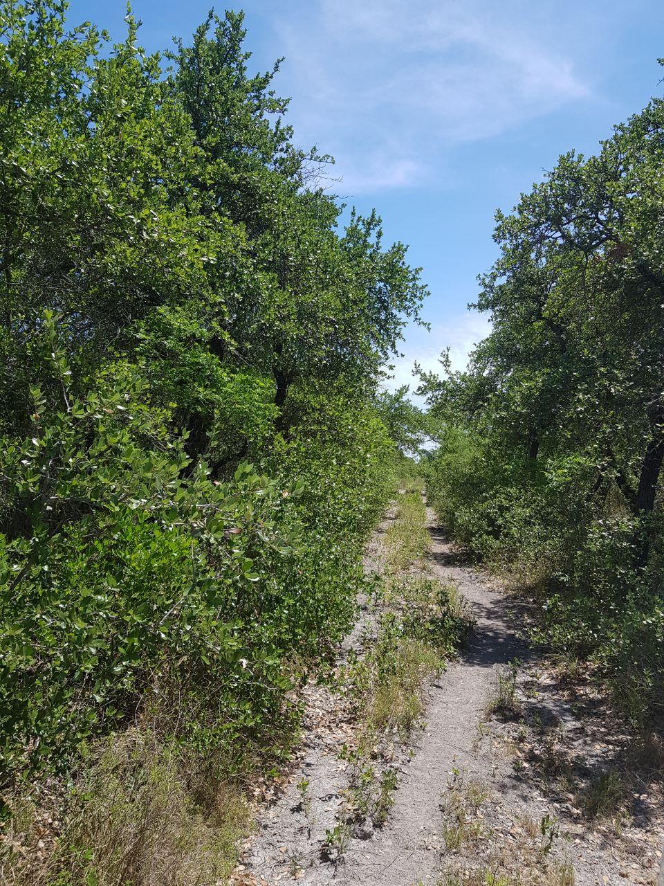 Vendo Rancho Los Magueyes 98 ha, Ejido Corte Nuevo, Rio Escondido ( VR #16)